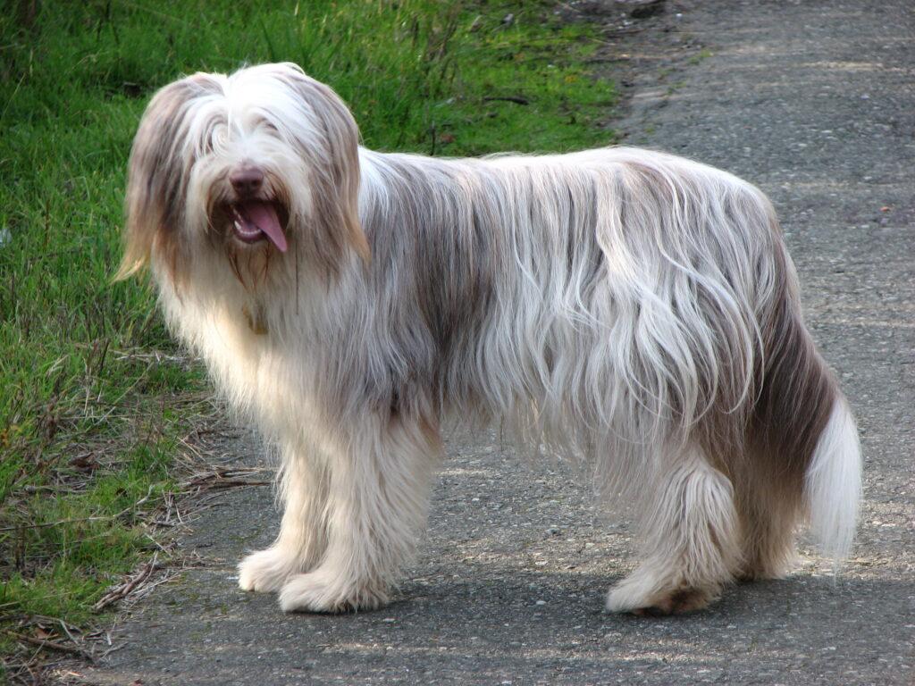 hund tappar inte hår