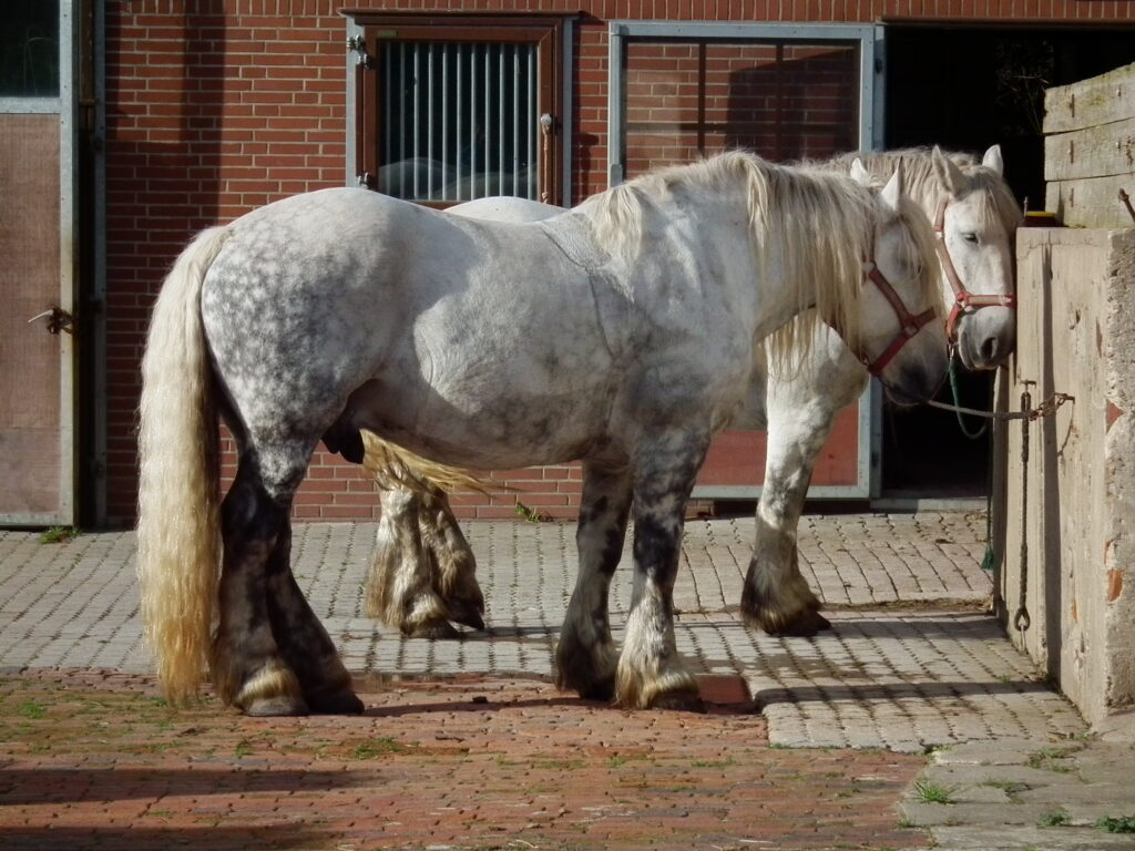 stor häst