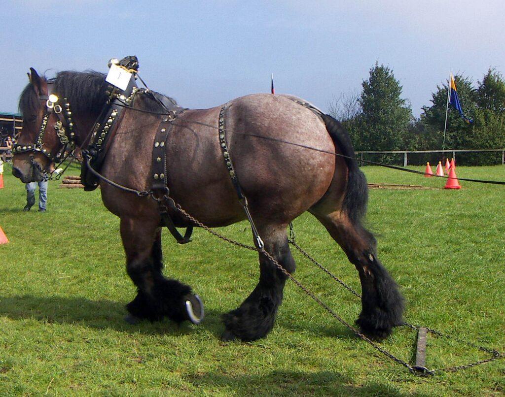 stark häst