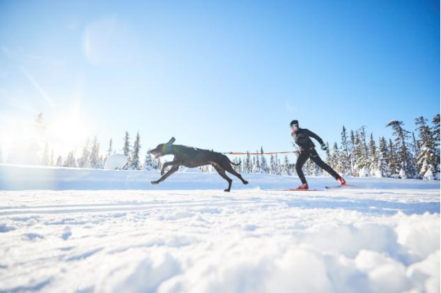 Bäst i test: Dragsele för hund – Bästa dragselen för hund 2021!