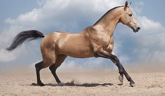 Världens äldsta häst