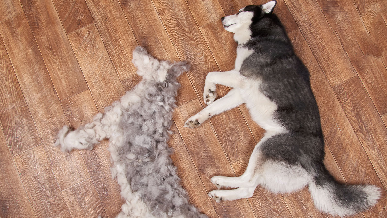 hundar som inte fäller