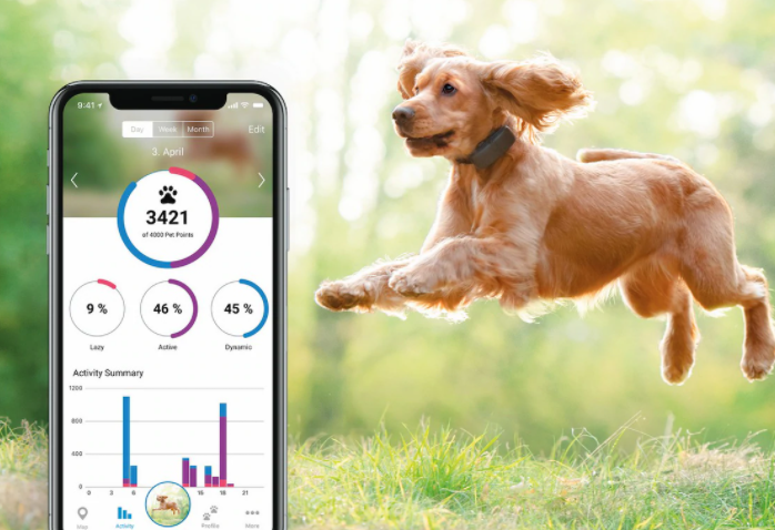 Hund GPS – Hitta bästa hundpejlen 2021!